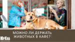 Можно ли держать животных в кафе