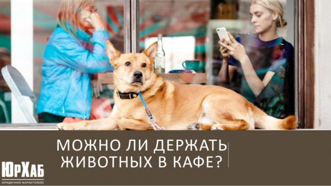 Можно ли держать животных в кафе изображение 1